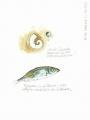 SBD-2012-04-02-El-Cotillo